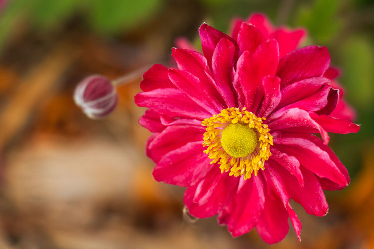 The flower.