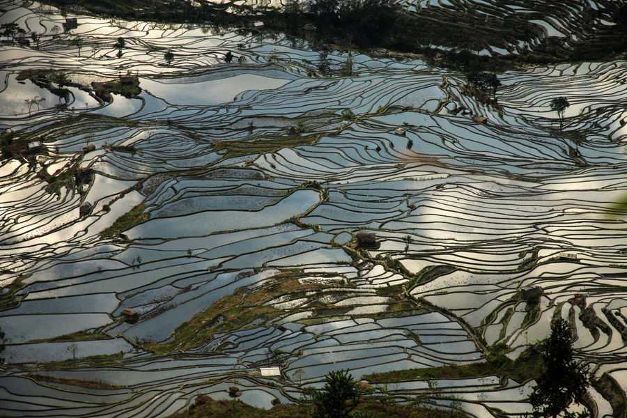 Beauty In Nature China Day Nature Nature No People Outdoors Reflection Reflections Rice Rice Field Rice Fields  Rice Paddy Rice Terraces Sky Reflection Sunset Tree Water World Heritage Yuanyang Yuanyang Terraced Fields Yunnan Lost In The Landscape Perspectives On Nature