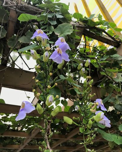 #flowers #nature #naturelover