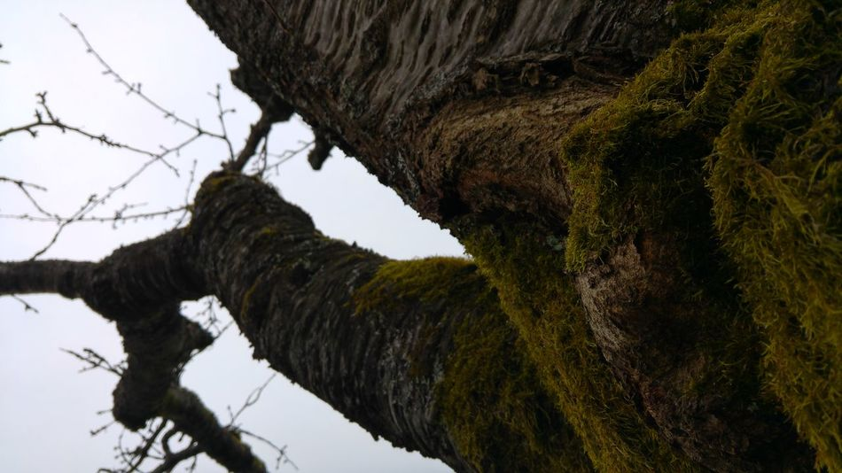 Beauty In Nature Branch Close-up Day Low Angle View Natural Pattern Nature No People Outdoors Sky Tree Tree Trunk Wood - Material
