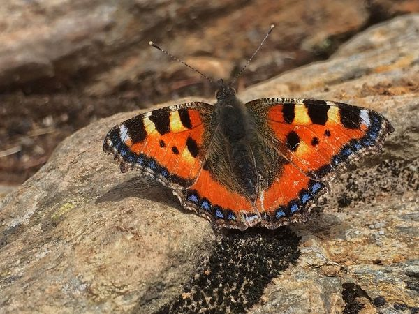 🦋 Insect Animals In The Wild Butterfly - Insect One Animal Animal Wildlife Nature Day Outdoors Beauty In Nature Butterfly Sunshine Outdoor Photography Stone