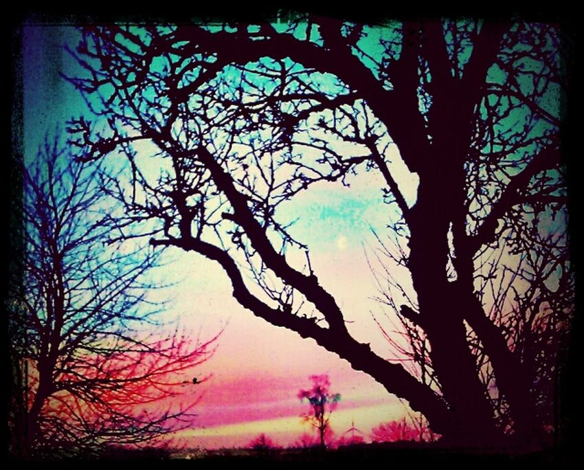 Waiting For Spring Heavenly Treestatic Pinkandblue
