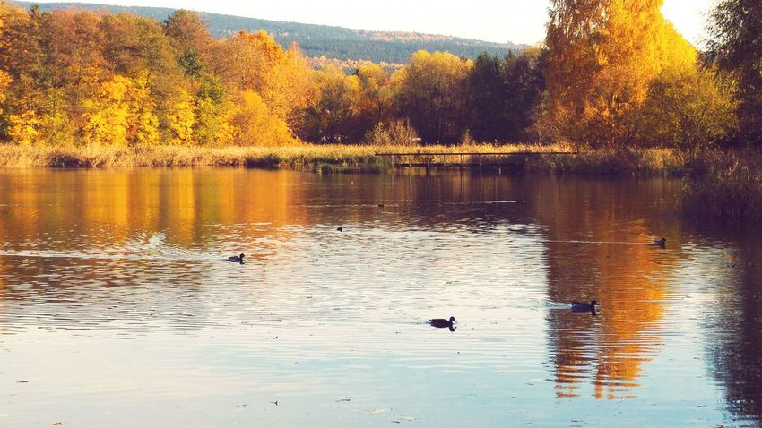 Lake Duckracenotduckface Enjoying Life Nature Photography Autumnbeauty LG G4 Autumn🍁🍁🍁 Entenrennen Ententeich Enten Wonderfullife Nostalgic Landscape Lifetimestories Nature_collection Magical See Herbststimmung