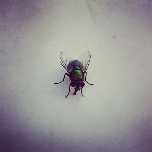 Returnofthefly LordOfTheFlies Thefly Animal One Animal Insect Animals In The Wild Notallatonce BBQ Bbqtime Yummy