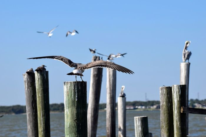 Animal Themes Animal Wildlife Animals In The Wild Bird Clear Sky Close-up Cormorant  Day Focus On Foreground Nature No People One Animal Outdoors Perching Sea Sky Spread Wings Water Wood - Material Wooden Post
