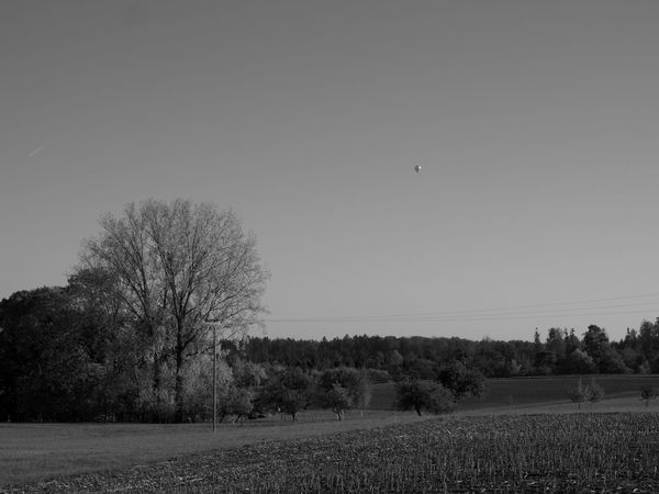 hot air balloon at south Germany Air Ballons Black & White EyeEm Nature Lover Tree Blackandwhite Blackandwhite Photography Clear Sky Day Eye4photography  Field Hot Air Balloon Landscape Nature No People Outdoors Rural Scene Tranquil Scene Tranquility Tree Wallpaper
