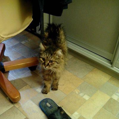 #кот #котэ #2013 #cat #cats Cat Cats котэ 2013 кот