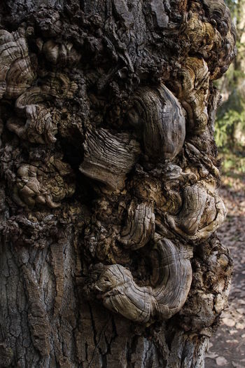 Beauty In Nature Close-up Day Full Frame Knotted Wood Nature No People Outdoors Textured  Tree Tree Trunk Tronco De Encina Wood - Material