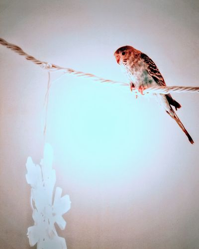 Low angle view of bird perching on string against sky