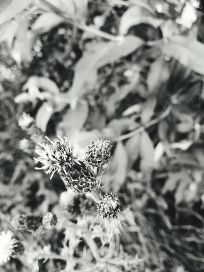 Monochrome Photography Plant Close-up Fragility Beauty In Nature Plant Growth Close-up Nature Fragility Beauty In Nature Focus On Foreground Selective Focus Day Botany Freshness Flower Springtime Outdoors Tranquility In Bloom No People Softness Scenics Blossom