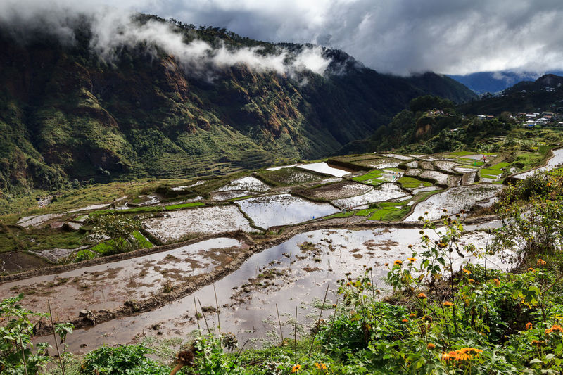 Sagada Rice Terraces Nature Tree Landscape Growth Water Non-urban Scene Beauty In Nature Outdoors No People Scenics Day Sky Mountain