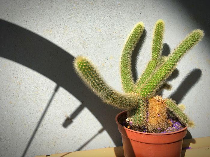 🌵🌵 Cactus