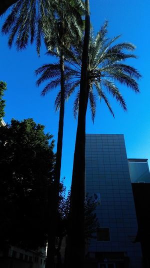 TakeoverContrast Palm Tree Tree Building Exterior Architecture Built Structure Blue Growth Day Skyscraper Office Building No People City Tall Sky Tall - High Clear Sky Low Angle View Outdoors