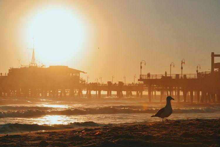Seagull Perching On Sea Shore Against Santa Monica Pier During Sunset