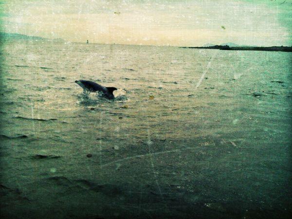 dolphin at Alcabre Dolphin