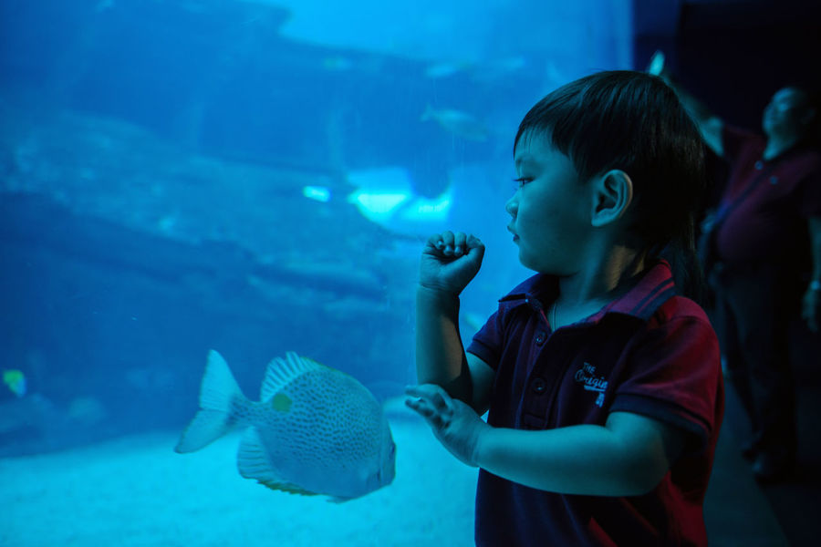 SEA Aquarium, Sentosa Singapore. Animal Themes Animals In Captivity Aquarium Aquarium Life Awe Beauty In Nature Child Childhood Children Only Eyeem Philippines Fish Fishes Girls Happiness Leisure Activity Looking Nature One Person Sea Life Sentosa Sentosa Singapore Swimming Underwater Watching Water