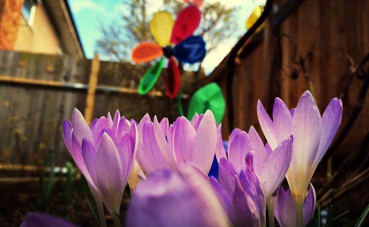 Taking Photos My Angels Garden