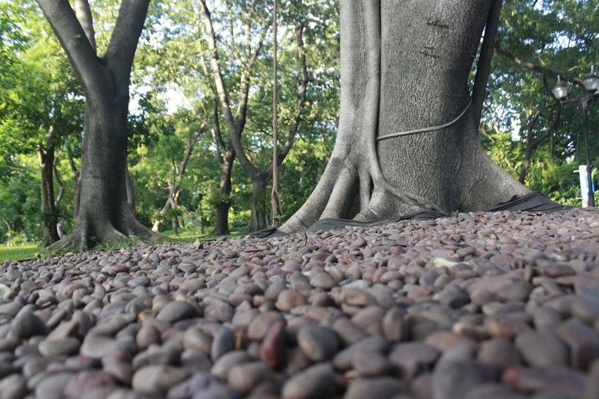 Waterfall Stone Outdoors Rock Floor Rock Gardens Tree