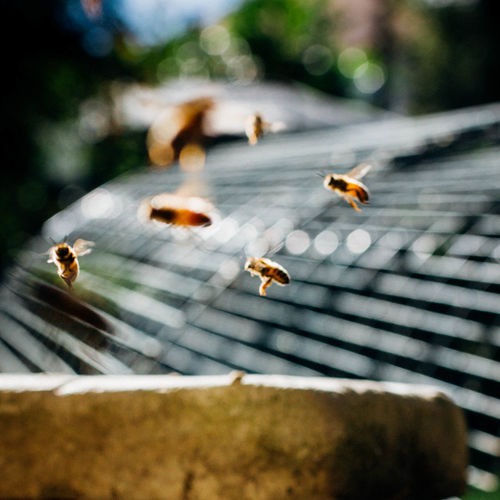 Close-up of honey bees flying at park
