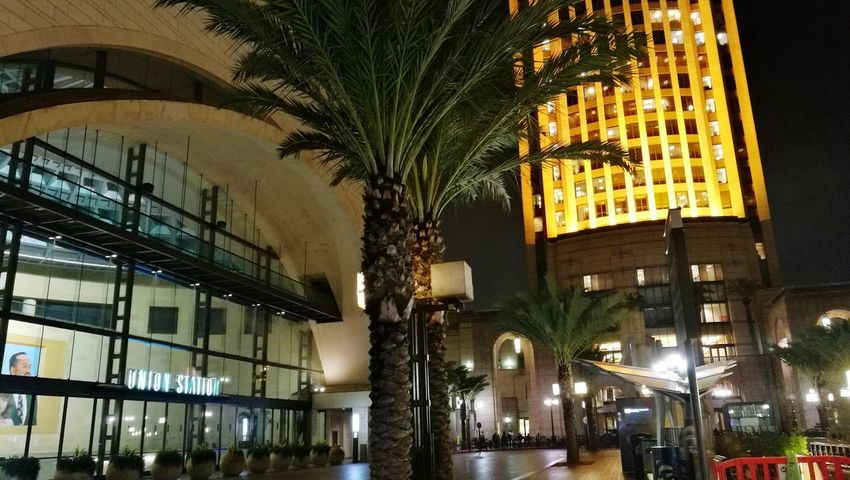 Night Illuminated Architecture Built Structure Tree Building Exterior Low Angle View Palm Tree City No People Indoors