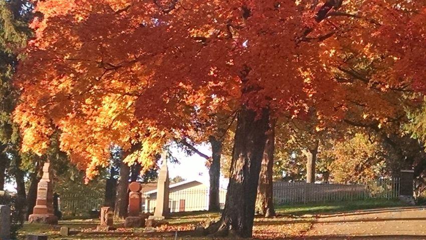Autumn Colors Nature_collection Landscape_Collection Cemeterybeauty