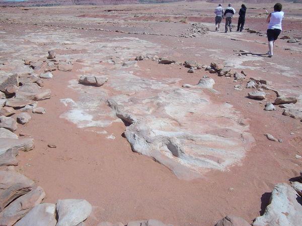 Arizona Cretaceous Day Desert Dinasaur Dinasaur Tracks Outdoors Tracks USA