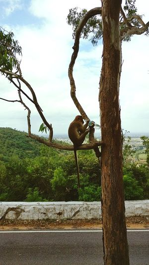 Thirst spares none Tree Cloud - Sky Tree Trunk Beauty In Nature Nature Sky Monkey Thisrt