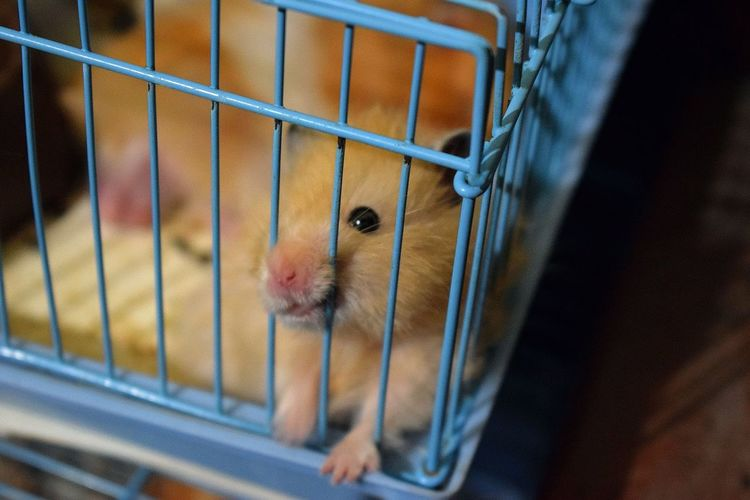 Close-up of hamsters in cage