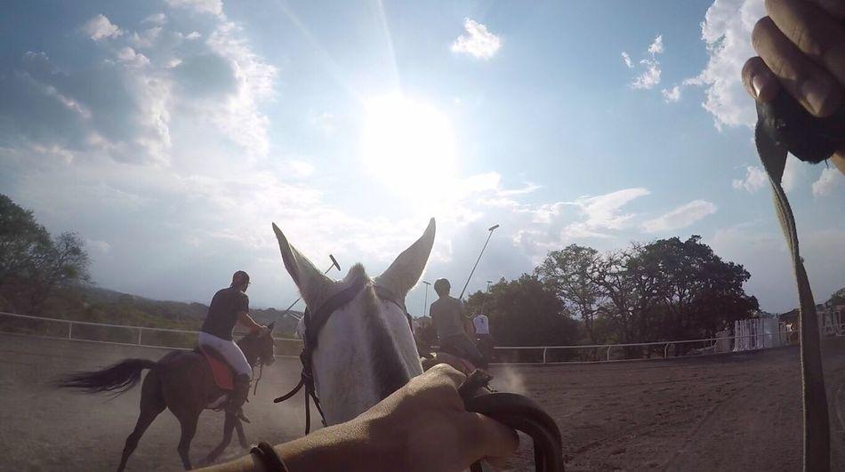 Polo horses 🐴 Horse Horseback Riding Riding Equine Equinelife Equinephotography First Eyeem Photo