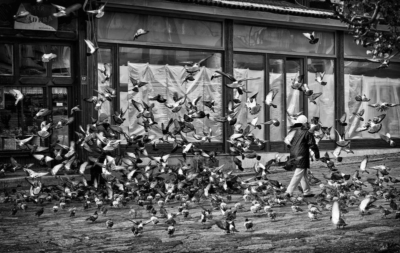 Flock of pigeons on street in city