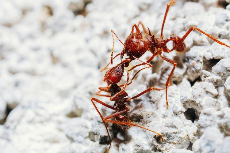 Close-up of fighting ants on leaf