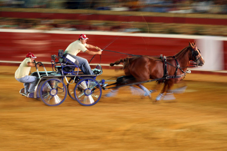 Chariot Chariot Race Horse Horses Ben Hur Event Faster Fast Moving