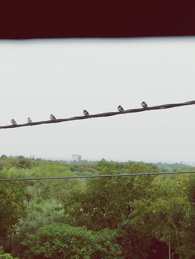 Water Outdoors Animal Themes Animal Wildlife Barbed Wire Security Protection Safety Chainlink Fence Metal Razor Wire Day Security System No People Sky Rural Scene Nature Bird Prison