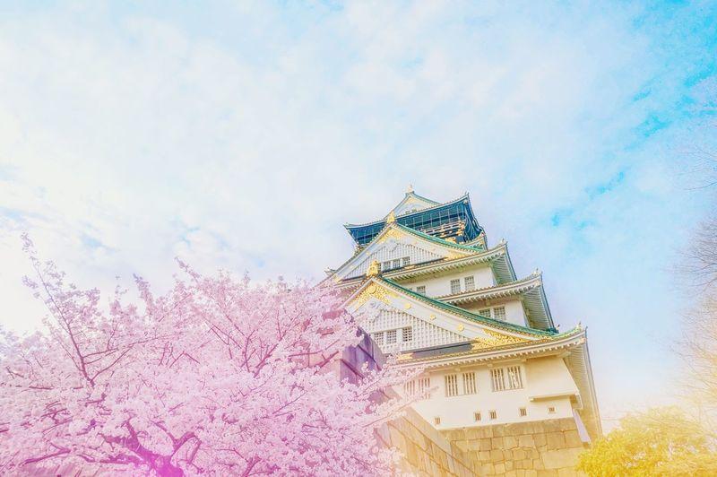 大坂城の春朝 OSAKA Osaka 大阪 Osaka Castle Japan Travel Anime Style Asdgraphy Sakura Spring Haru