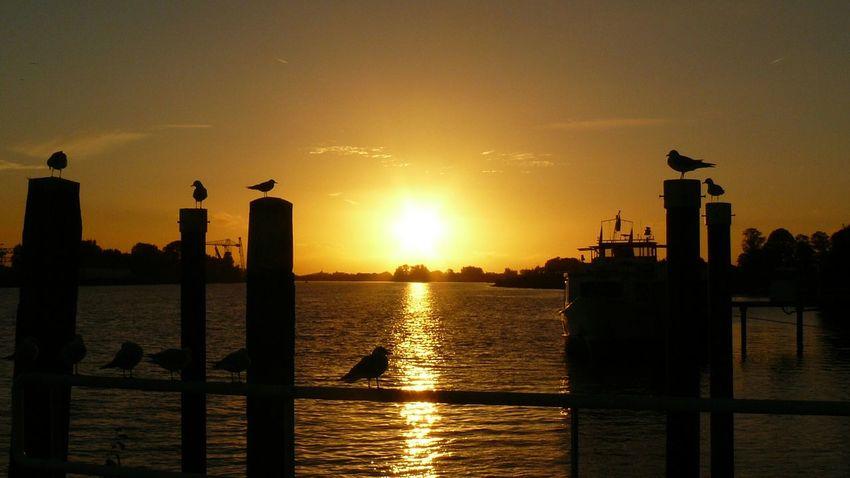 Water City Sea Sunset Silhouette Sunlight Urban Skyline Sun Reflection Sky