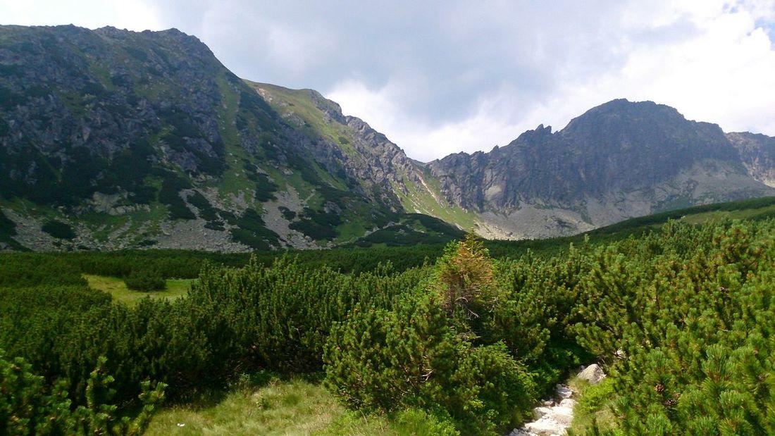 So Sieht Ein Schöner Wanderweg Aus Naturelovers In Der Krummholzzone,