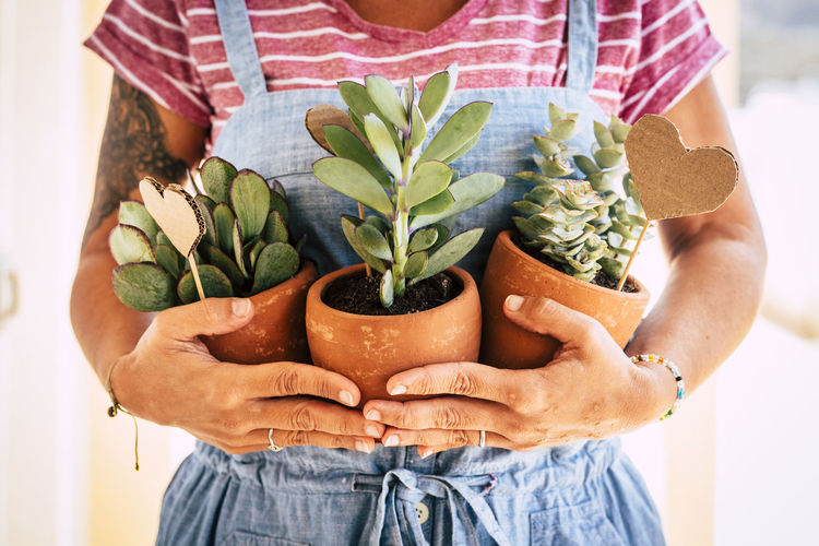 Midsection of woman holding potted plants