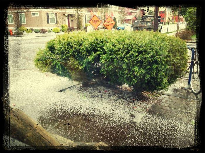 Hale Storm In NoPo