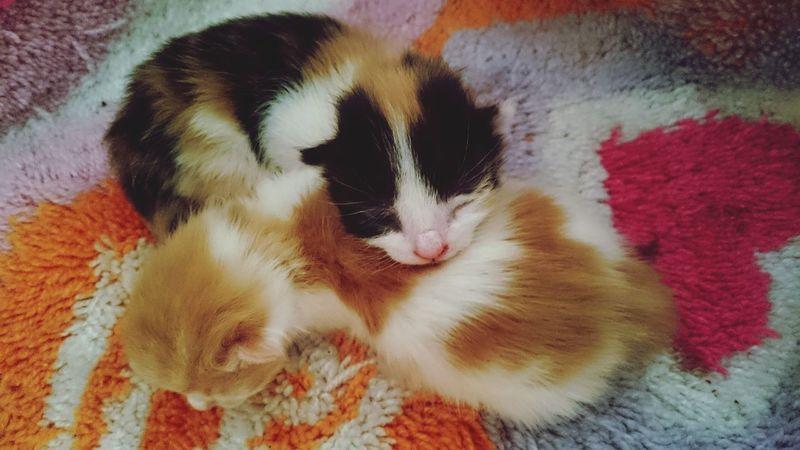 Cat Babycat ❤