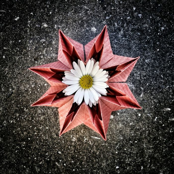 EyeEm Nature Lover Daisy Flowerporn Getting Inspired EyeEm Best Shots Check This Out Origami Art Simplicity Enjoying Life