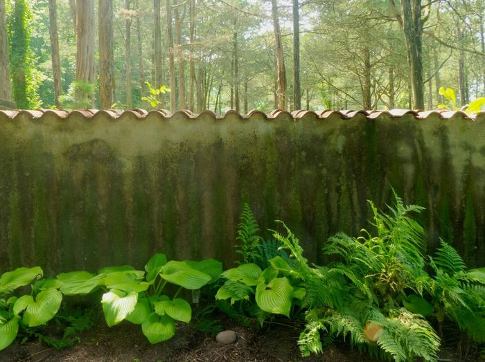 Late afternoon at the garden wall. Things That Are Green Late Afternoon Light Late Afternoon Nature Plants Summer2015 Summer Inside And Out Wall The Great Outdoors - 2015 EyeEm Awards