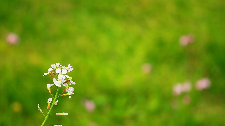 「孤高の名も無き花」 Taking Photos Enjoying Life Flowerlovers EyeEm Flower Flowers_collection Flower Collection FlowerBorn Collection Flowers Flower 名も無きってこたぁないやろ?😅💦