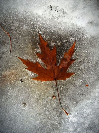 Frozen!! Leaf Change Pretty♡ Check This Out Nature Outdoors Close-up Beauty In Nature Fragility Frozen Nature River Ice