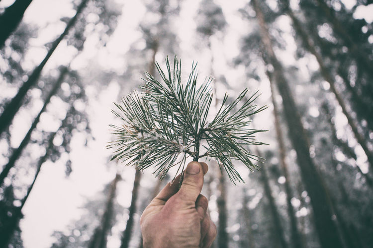 Close-up Day Focus On Foreground Forest Hand Holding Human Body Part Human Finger Human Hand Leisure Activity Lifestyle Lifestyles Men Nature Nature_collection One Person Outdoors Personal Perspective Pine Pine Tree Pineapple Real People Sky Still Life Tree