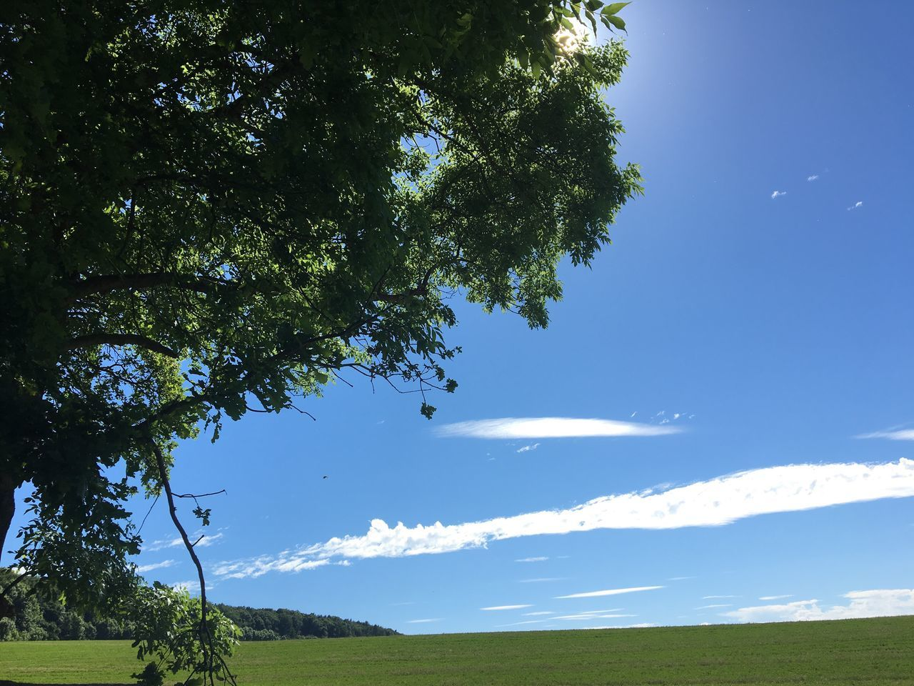 tree, nature, tranquil scene, beauty in nature, scenics, tranquility, growth, landscape, day, idyllic, field, green color, sky, outdoors, sunlight, no people, grass, branch, blue sky