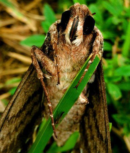Moth Moths
