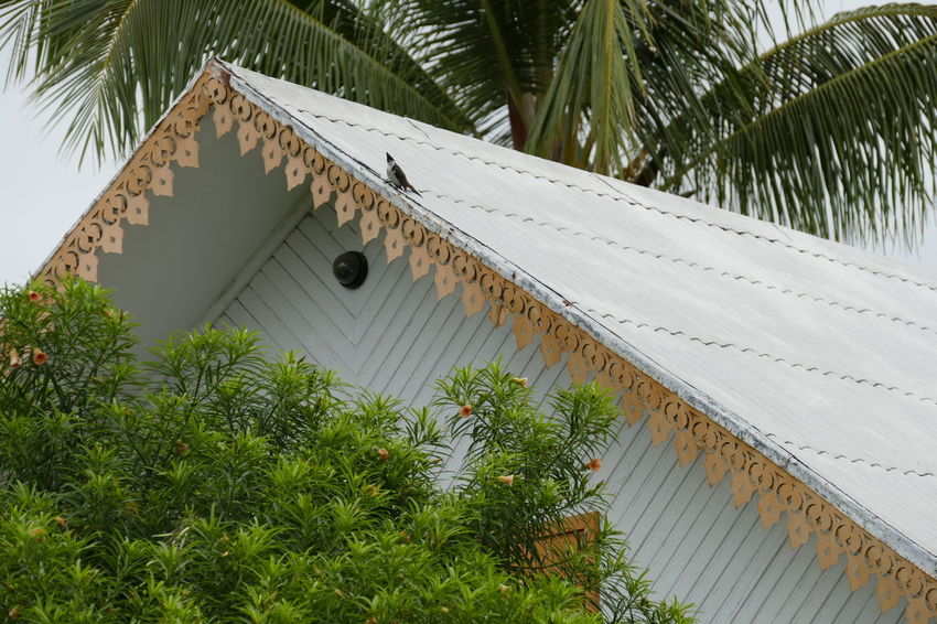 Architecture Bird Building Exterior Built Structure Day Nature No People Outdoors Palm Tree Roof Tree