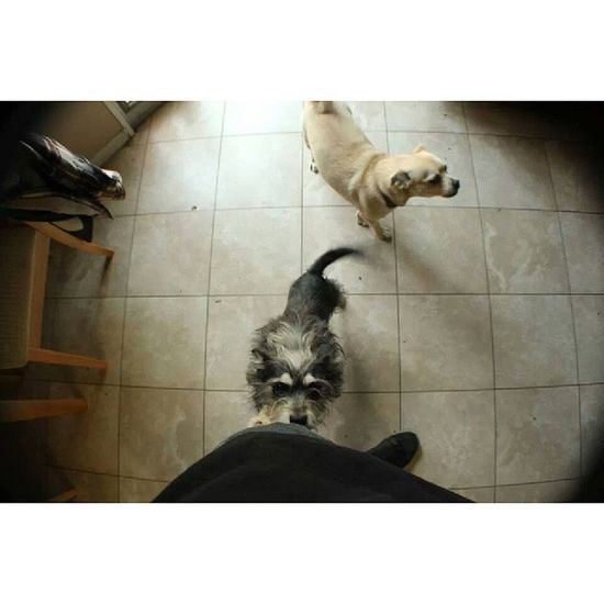 My dogs Nofilter Widelens Buster Abby