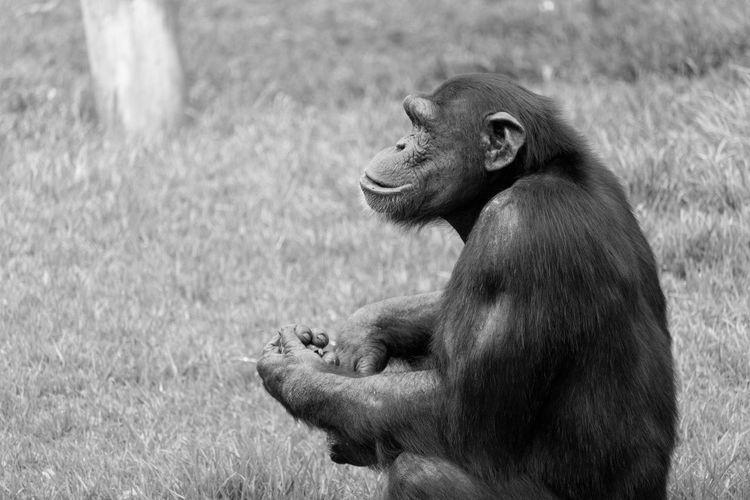 Monkey sitting on grassy land