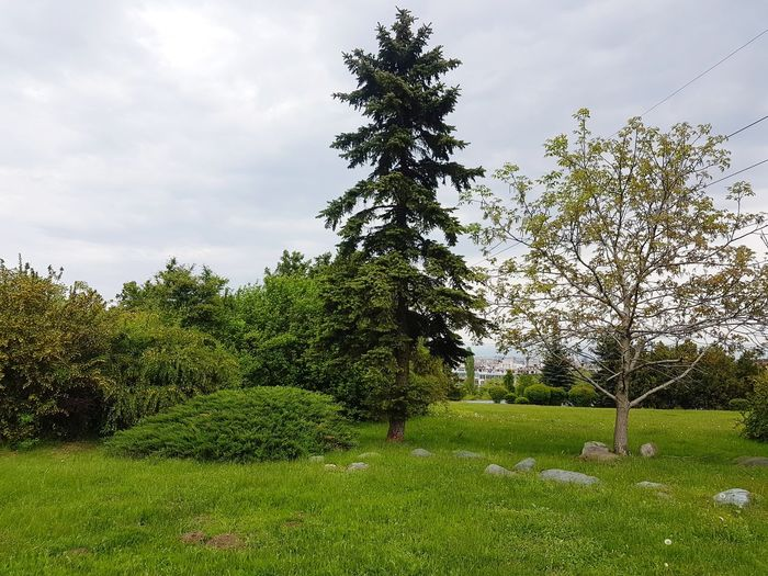 Green Area In